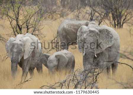 a big elephant family in africa is walking around for eating and drinking water #1179630445