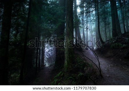 Light breaking through the mist and the trees on a hike near Vancouver in British Columbia Canada.  High res.