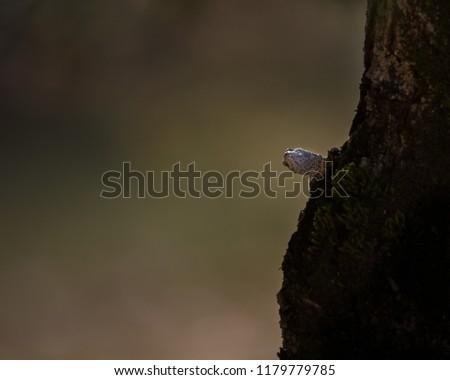 closeup of the head of a lizard on a tree #1179779785