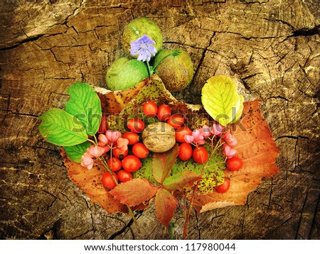 Aging autumn fruits collection photography