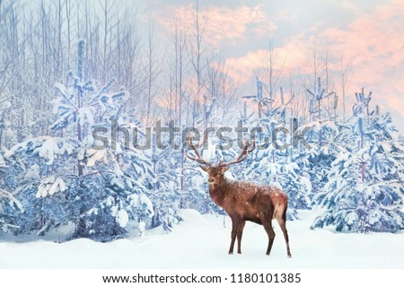 Lonely noble deer mail with big horns against winter fairy forest at sunset. Winter Christmas holiday image.  #1180101385