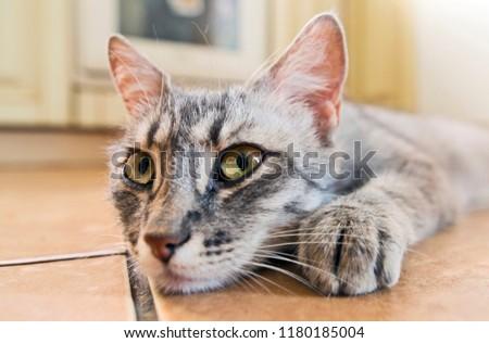 Closeup of cat #1180185004