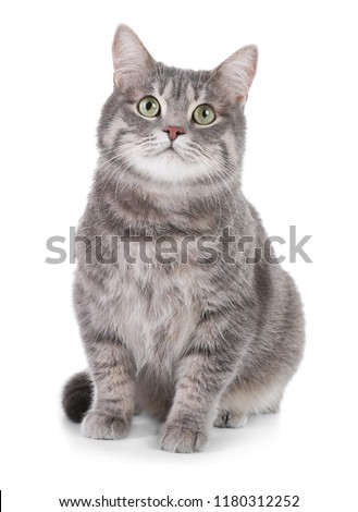 Portrait of gray tabby cat on white background. Lovely pet #1180312252