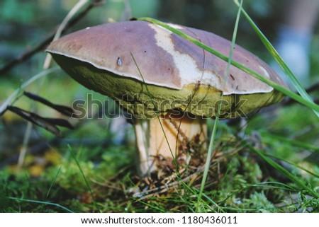 beautiful boletus mushroom #1180436011