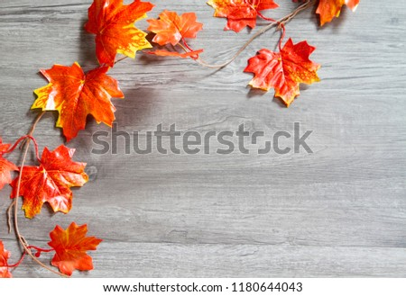 Frame of autumn maple leaf on grey wood background with copy space #1180644043
