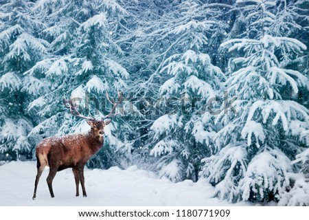 Beautiful Deer male with big horns in the winter snowy forest. Winter natural background. Christmas image.  #1180771909