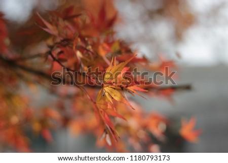 Autumn leaf bokeh #1180793173
