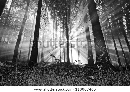 sunrise in a forest Royalty-Free Stock Photo #118087465