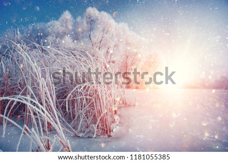 Beautiful Winter landscape scene background with snow covered trees and ice river. Beauty sunny winter backdrop. Wonderland. Frosty trees and reed, snowy forest. Winter nature in sunlight. Christmas