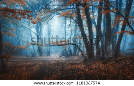 Mystical dark autumn forest with trail in blue fog. Landscape with enchanted trees with orange leaves on the branches. Scenery with path in dreamy old foggy forest. Fall colors. Nature. Vintage toning #1181067574
