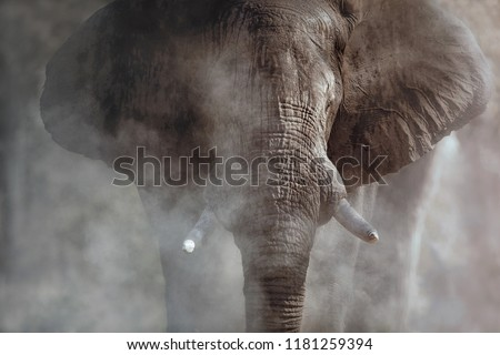 Amazing african elephant with dust. Huge elephant male in front of the camera. Wildlife scene with dangerous animal. Great tusker in the nature habitat. Loxodonta africana. #1181259394
