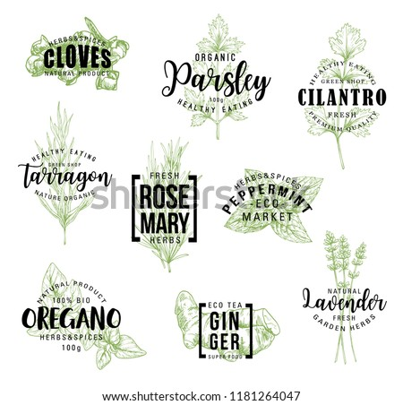 Spices and herbs lettering, natural food ingredient labels. Rosemary, mint and parsley, ginger, oregano and clove, tarragon, cilantro and lavender flower sketch. Vector seasonings illustrations #1181264047
