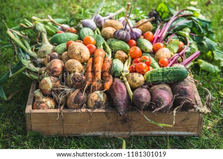 Bio food. Garden produce and harvested vegetable. Fresh farm vegetables in wooden box #1181301019