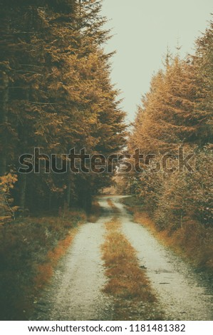 Path in colorful autumn forest vinage photo