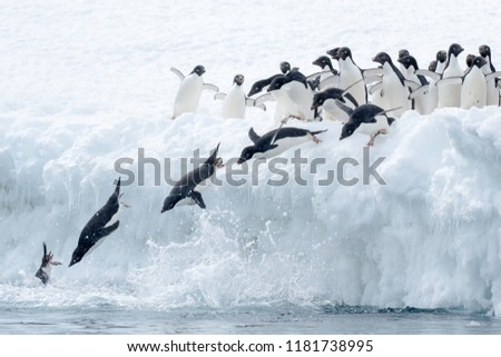 Adelie Penguin (Pygoscelis adeliae) - Syncronised Diving