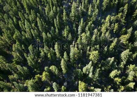 Aerial view of pine trees in Estes Park in the Rocky Mountains, Colorado, USA.  #1181947381