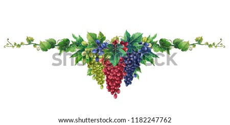 Watercolor bunches of white, red and blue grapes hanging on the branch with leaves. Hand painted illustration isolated on white background