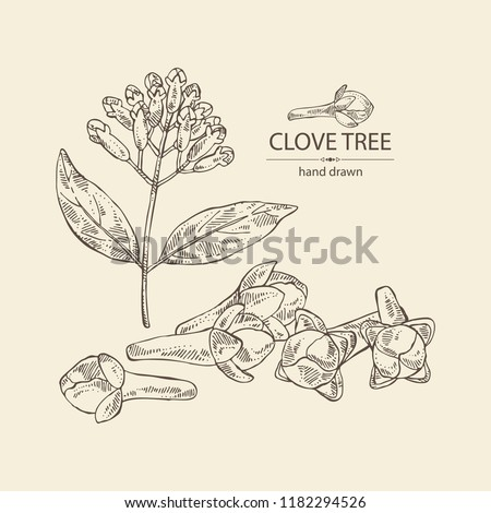 Clove tree: buds and leaves. Vector hand drawn illustration. Royalty-Free Stock Photo #1182294526
