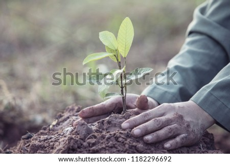 Planting small trees with two hands on the ground, to grow a shade and a good environment, reduce global warming. #1182296692
