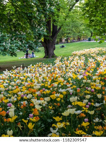 People eating pic-nic in a park with tulips in the summer of stockholm