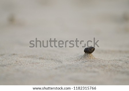 A great photo of a little black stone on the small beach sand hill  #1182315766