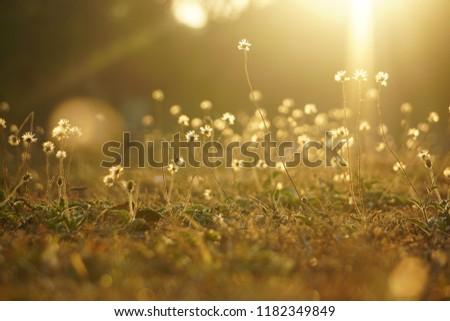 Meadow in the sunrise #1182349849