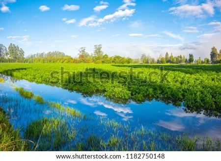 potato crops blue sky #1182750148