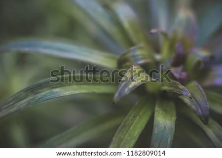 green summer plant #1182809014