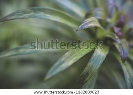 green summer plant #1182809023