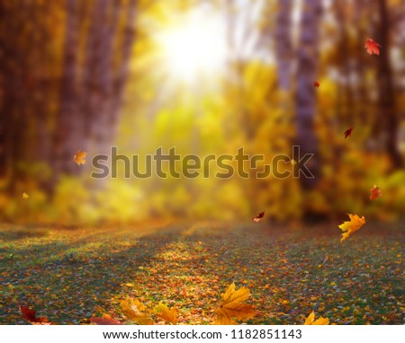 Beautiful autumn landscape with yellow trees and sun. Colorful foliage in the park. Falling  leaves natural background .Autumn season concept #1182851143