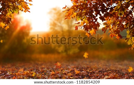 Beautiful autumn landscape with yellow trees and sun. Colorful foliage in the park. Falling leaves natural background #1182854209