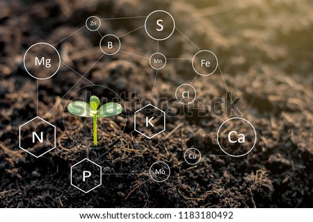 The seedlings are exuberant from abundant loamy soils and have a digital mineral icon needed for planting. #1183180492