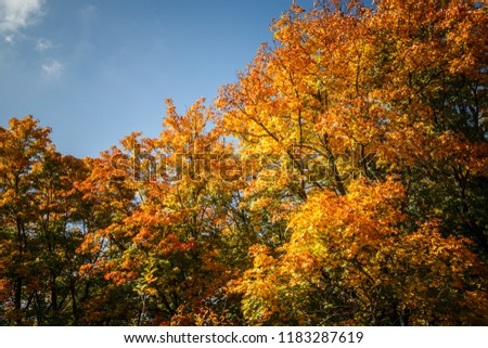 The autumn leaves in their most beautiful colors against a blue sky. #1183287619