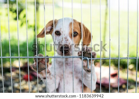 homeless dog puppy behind dog shelter bars Royalty-Free Stock Photo #1183639942