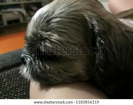 Cute sechu profile #1183856119