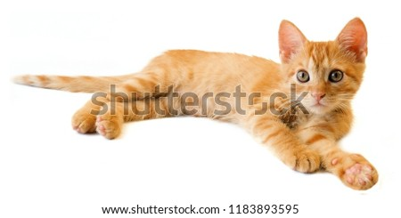 ginger cat in different position isolated on white background #1183893595