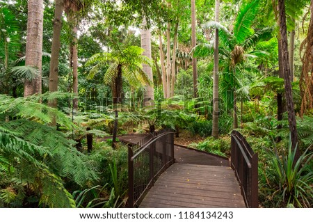 Path through the Fern Gully of the Royal Botanic Gardens in Melbourne. #1184134243