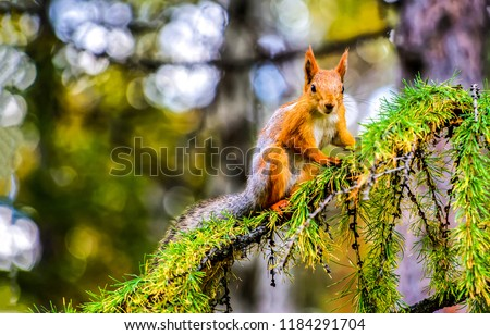 Squirrel on tree branch. Squirrel in nature. Cute squirrel on tree branch. Squirrel portrait #1184291704