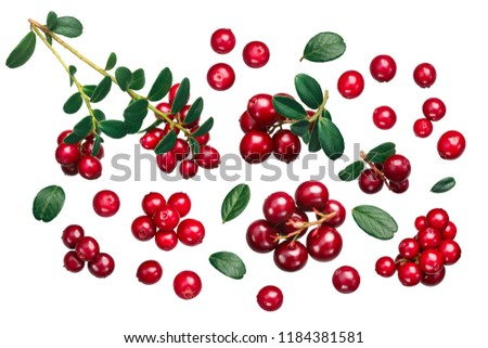 Lingonberry (fruits of Vaccinium vitis-idaea) with leaves, top view #1184381581