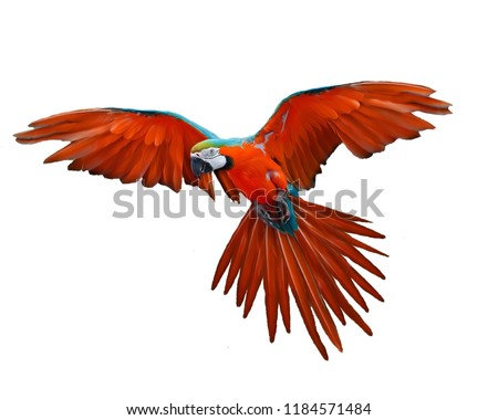 Parrot flying red photo image wallpaper #1184571484