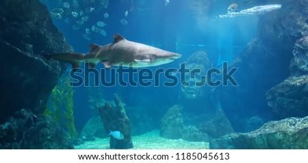 aqualium, shark, water #1185045613