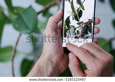 mobile photography art. perfect photo creation process. technology innovations for better results. hands holding smartphone and focusing on green ficus plant.