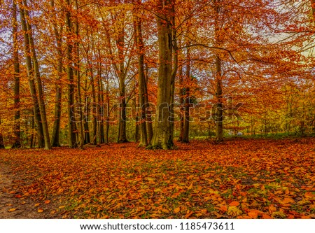 Beautiful autumn in Germany #1185473611
