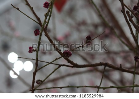 flower leafless branches decoration  #1185529984