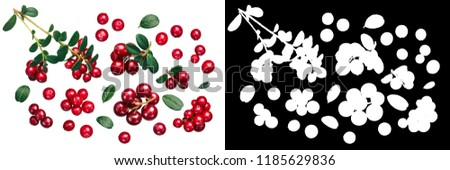 Lingonberry (fruits of Vaccinium vitis-idaea) with leaves, top view #1185629836