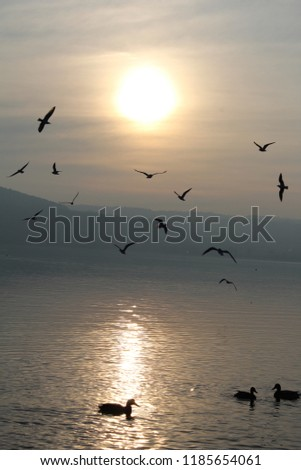 birds sea gull flying sun sky white lakeside #1185654061