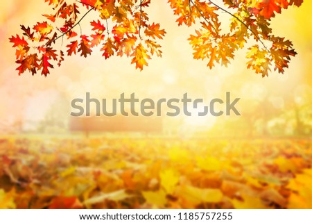 Golden autumn sunset colorful tree leaves background #1185757255