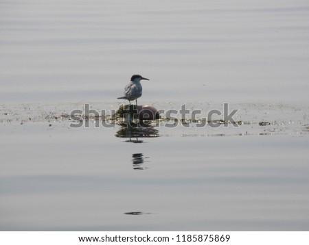 bird on the lake #1185875869