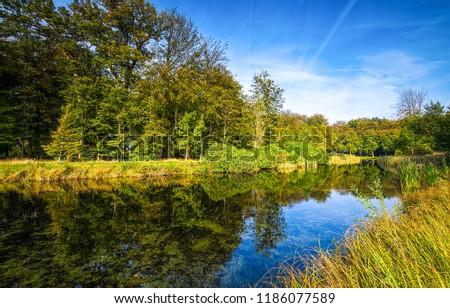 Summer forest river landscape. Forest river reflection view. Summer forest river reflection. Forest river water scene #1186077589