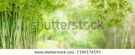 Bamboo forest and green meadow grass with natural light in blur style. Bamboos green leaves and bamboo tree with bokeh in nature forest. Nature pattern view of leaf on blurred greenery background. #1186176595